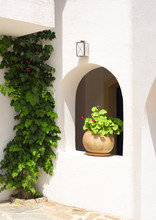 Clay Pot With Geranium Plant And Vine On A Wall In Greece