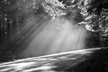 Light Rays On Road