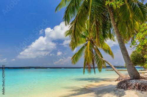 Tropical lonely beach at Maldives with blue sky, palm trees and turquoise water
