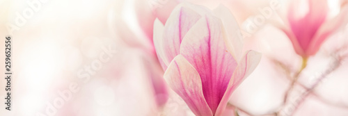 Staande foto Magnolia magnolia flowers background