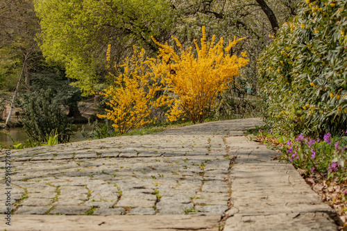 Foto auf Leinwand Garten Yellow flowers, first spring, tranquility, tranquility, parks, sightseeing, post-work walking, weekend trip