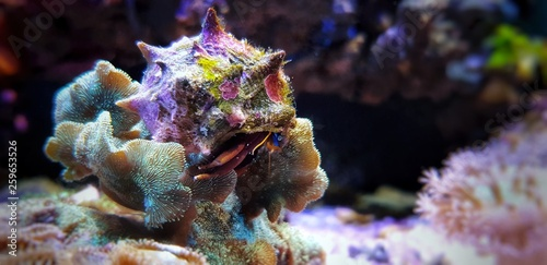 Photo Hermit crab invertebrate in fish aquarium
