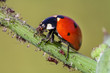 hunter ladybug 2 ..