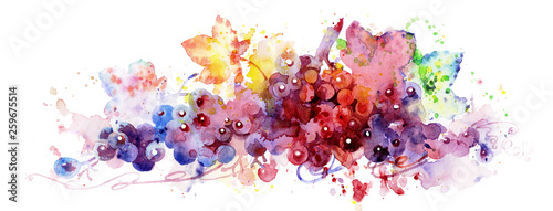 Red grapes, watercolor illustration, plant element for design and creativity. Branch of grapes. Handmade watercolors. Multi-colored grapes.