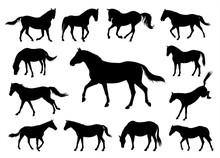 Horses Silhouettes Graphic Vec...