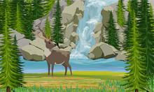 Deer On The Shore Of A Mountain Lake. Waterfall, Rocks And Spruce Trees. Wild Nature Of Europe, Scananavia, USA And Canada. Realistic Vector Landscape
