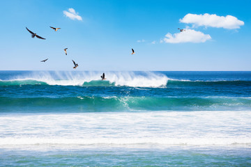 Fototapeta Morze Beautiful beach, tropical sea and blue sky with seagulls, Phuket, Thailand