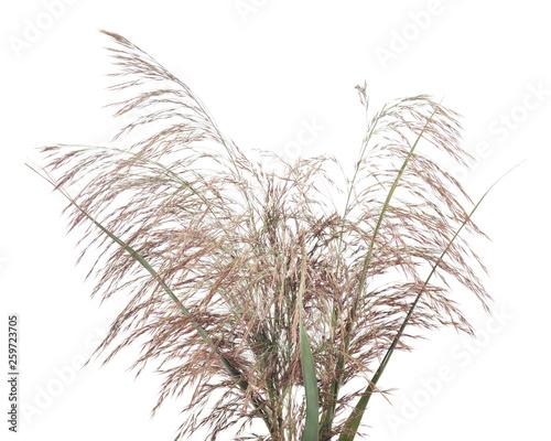 Fotografie, Obraz  Bouquet of cane.