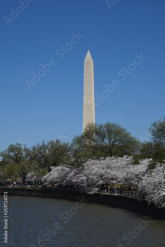The Washington Monument from the Tidal Basin showing the Cherry Blossoms