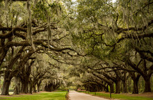 Boone Hall Pantation In Charle...