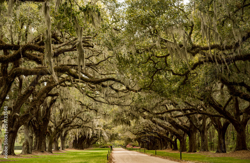 Boone Hall pantation in Charleston SC USA