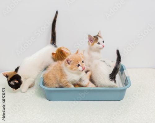 Pinturas sobre lienzo  Kittens sitting in cat toilet