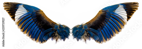 Fototapeta blue wings isolated on a white obraz