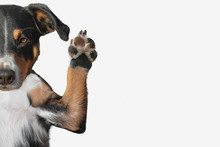 Closeup Of A Dog's Paw Raising Up With Room For Text