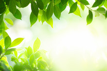 Green Nature Background. Closeup Nature View Of Green Leaf On Beauty Bokeh Background