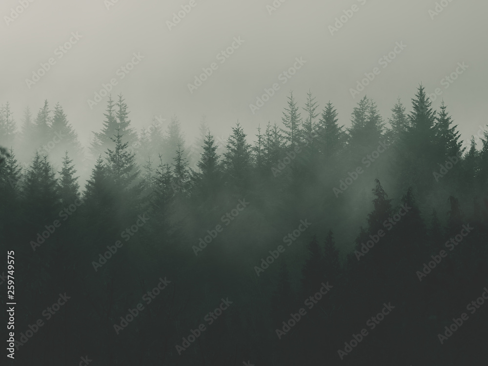 Fototapety, obrazy: nature background with moody vintage forest
