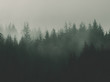canvas print picture - nature background with moody vintage forest