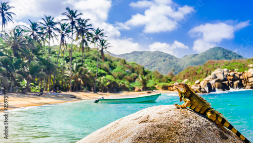 Fotomural  View on iguana on a rock in national park Tayrona in Colombia