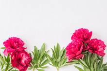 Flat Lay Composition With Red Peonies And Green Leaves On A White Background