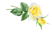 Watercolor Bouquet Of Yellow R...