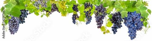 Banderole de vigne Fototapeta