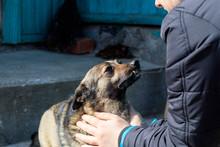 Girl Strokes A Stray Dog. She Really Likes. Shallow Depth Of Field.