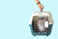 Hand Carrying Cat In A Cage In...