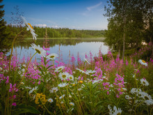 Blooming Meadow On Shore Of La...