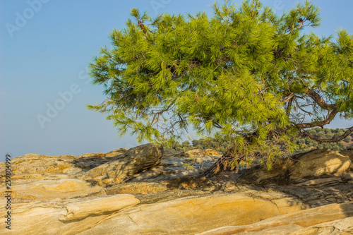 Fotografia  local tropic nature scenic landscape place with south cedar tree on rocky ground