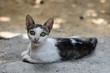 canvas print picture - Geheimnisvolle Katze mit durchdrigendem Blick und gruenen Augen