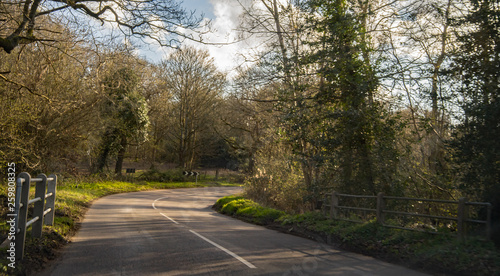 Foto The tight and twisty S bend on a shaded tree lined rural road on a bright spring