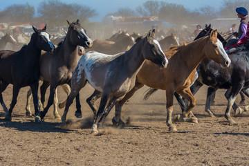 caballos trotando