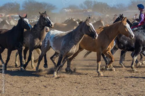 Pinturas sobre lienzo  caballos trotando