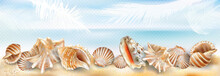 Exotic Seashell Mollusk On A Sand Beach Transparent Background