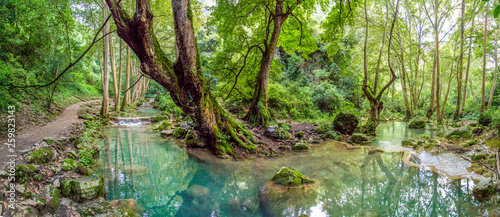 Rainforest river Canvas