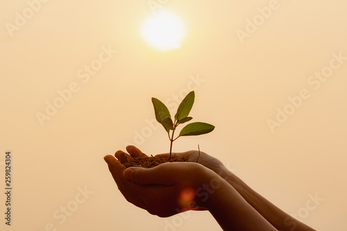 Stampa su Tela Close up human hand holding plant growing at sunset background.