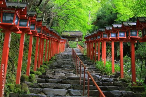 Recess Fitting Bamboo Kifune shrine(貴船神社)