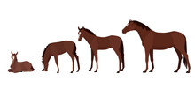 Different Ages Of Horse Vector Illustration, From Newborn To Adult Horse. Horse Growth Stages