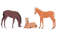Vector Illustration Of Little Foals In Different Poses. Lying, Standing And Grazing Baby Horses