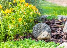 Decorative Hedgehog Garden Dec...