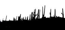Black And White Arizona Saguaro Landscape Silhouette.