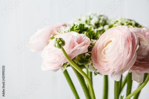 Obraz na płótnie Beautiful fresh pink ranunculus flowers, white background.