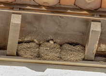 Swallow And Nests