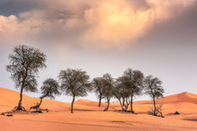 Ghaf Trees And Pristine Red Sand Dunes Against A Blue Sky In The Arabian Desert.