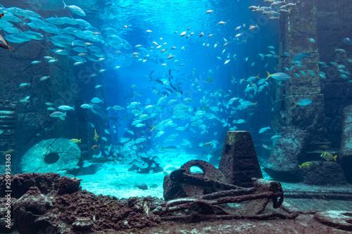Aquarium at Atlantis, Bahamas Canvas Print