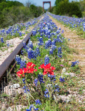Colorful Wildflowers Along An Old Railroad Track Leading To A Trestle Bridge