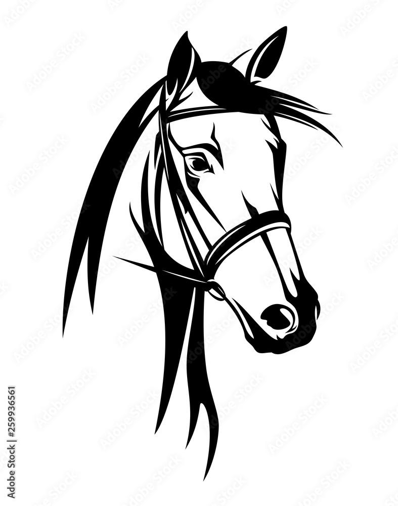 Fototapeta horse head with bridle - black and white equestrian sport vector portrait