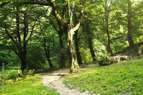 Photo Summer mountain forest