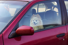 The Dog Is Closed In The Car, ...