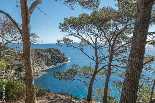 Poster Gris paysage de l'île de Porquerolles